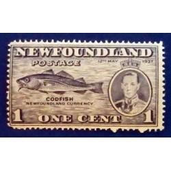 Newfoundland (Terre-Neuve )...